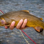Free High Country Fishing Presentation